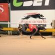 Albion Park 30 10 17 - Photos Taken By Toby Coutts