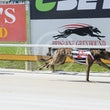 Albion Park 01 11 17 - Photos Taken By Toby Coutts