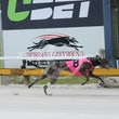 Albion Park 08 11 17 - Photos Taken By Toby Coutts