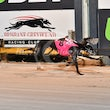 Albion Park 16 11 17 - Photos taken by Michael McInally, Toby Coutts and David McInally
