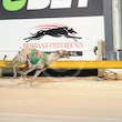 Albion Park 20 11 17 - Photos Taken By Toby Coutts