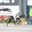 Albion Park 10 12 17 - Photos Taken By Toby Coutts