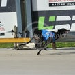 Race 9 Ima Paceman