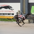 Albion Park 01 01 18 - Photos Taken By Toby Coutts