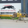 Albion Park 03 01 18 - Photos Taken By Toby Coutts