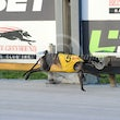 Albion Park 14 01 18 - Photos Taken By Toby Coutts