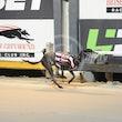 Race 5 Chevaleir Nuit