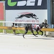 Albion Park 17 01 18 - Photos Taken By Toby Coutts