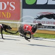 Albion Park 31 01 18 - Photos Taken By Toby Coutts