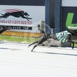 Albion Park 14 02 18 - Photos taken by Toby Coutts