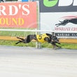Albion Park 18 02 18 - Photos taken by David McInally