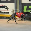 Albion Park 15 04 18 - Photos Taken By Toby Coutts
