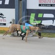 Albion Park 20 06 18 - Photos Taken By Toby Coutts