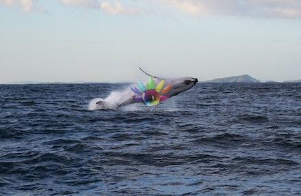 Whale Cruise '17