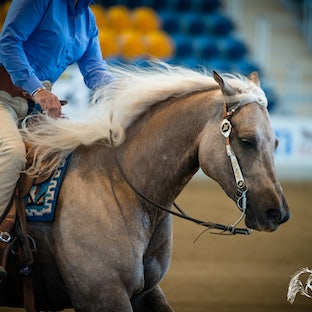 QRHA State Championships - Thursday 2014 - Images from the Championships are available as individual digital images (private or commercial use) or you...
