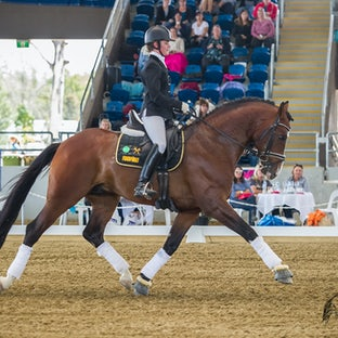 Qld FOD - Stallion Parade - Images from the Dressage Festival Main Arena (Stallion Parade) - we will be updating the galleries regularly. Special discount...