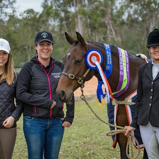 ACE Young Horse Championships 2016 - We have uploaded a sample of each horse photographed on the day.  If you would like to see other images please email...