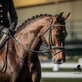 NADEC Dressage Spectacular - A brief glimpse of some super horses over the weekend ... Replay Equestrian were at the venue only on Sunday am... images...