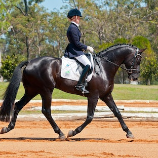 QSDC - Sun Special below - Dressage Special Discounted $45 package Order individual Digital images online or Order via email  - Dressage Special Discounted...