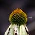 The Mellow Flower