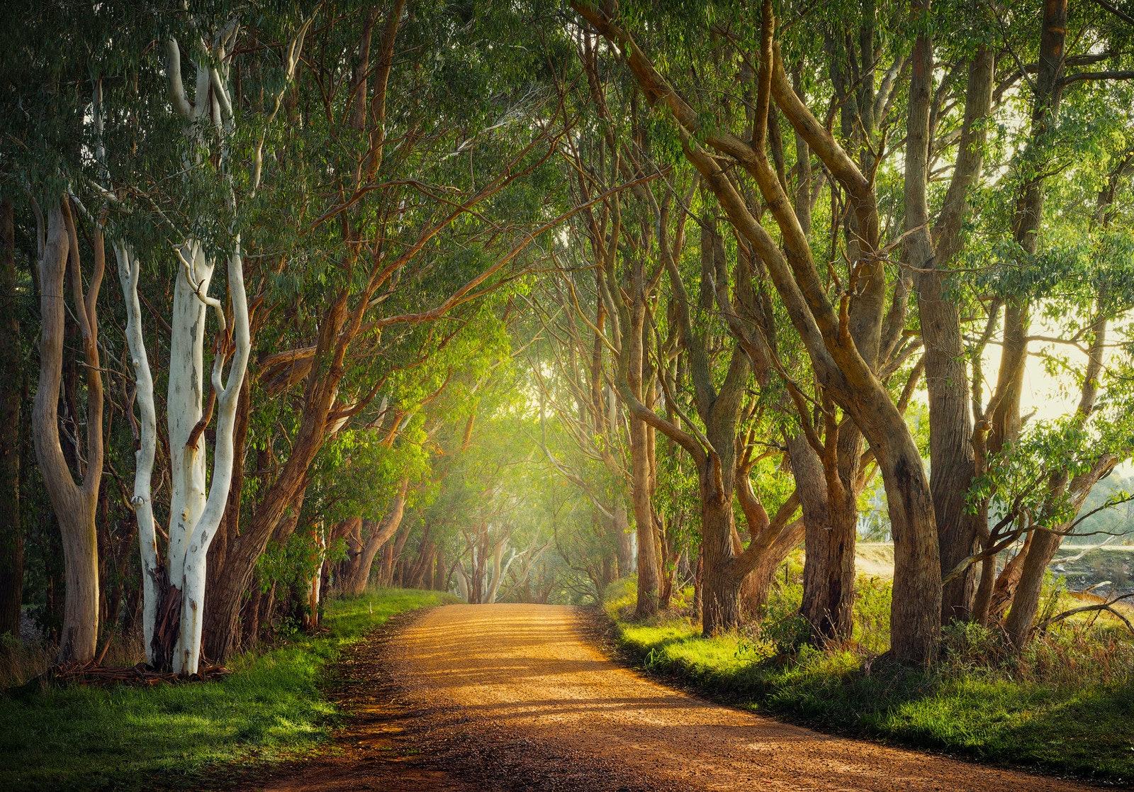 Country Road - Adelaide Hills, SA