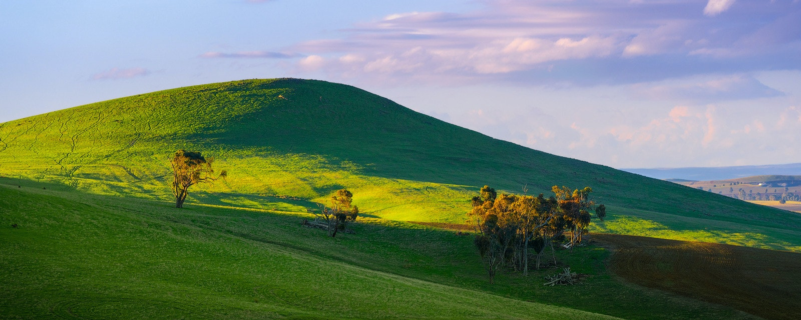 Lush - Clare Valley, SA
