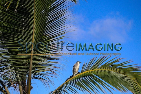 Maui Night Heron - MINOLTA DIGITAL CAMERA