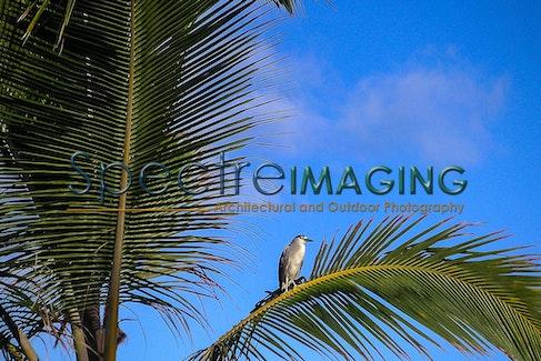 Maui Night Heron - MINOLTA DIGITAL CAMERA