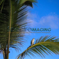 Fauna Gallery 1 - Images Focusing On The Animal World