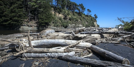 Bleached Tree Bones - One of the few stops along the way. Bleached white tree bones on black sand. Very striking with the small river trickling to the...