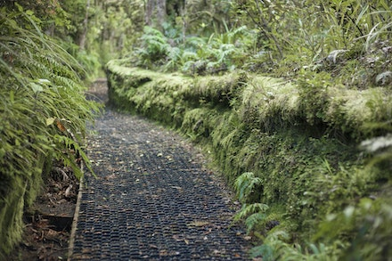 Moss Fleece Walls - Loved the way the walls were fleeced with moss. Thats the way it looked.