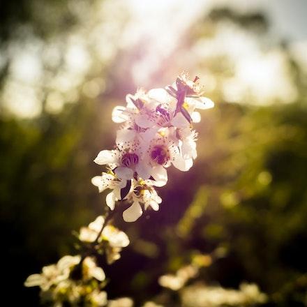 A Morning Flower