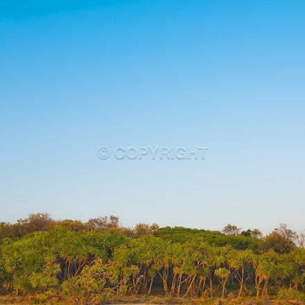 Beach bush
