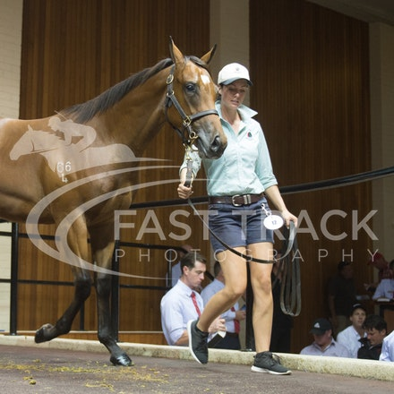 Lot 12, Delago Deluxe x Forever The Chill, Filly, Newhaven_28-02-16, Inglis Premier, Melbourne, Sharon Chapman_0091