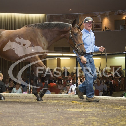 Lot 34, Delago Deluxe x Great Joy, Filly, Huntworth_28-02-16, Inglis Premier, Melbourne, Sharon Chapman_0095