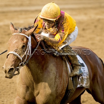 Race Day, Cavorting, Irad Ortiz Jnr_08-08-15, Saratoga, WIN_0201