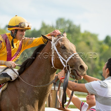 Race Day, Cavorting, Irad Ortiz Jnr_08-08-15, Saratoga, WIN_0208