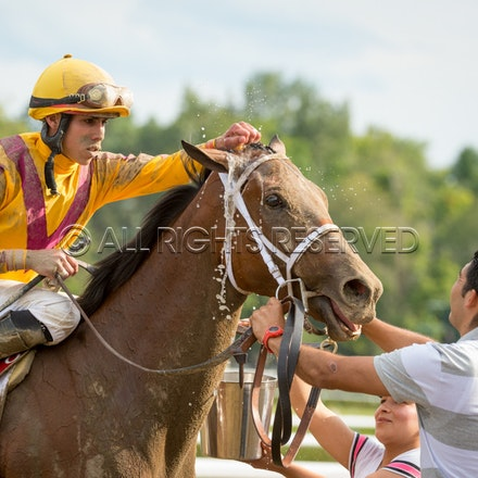 Race Day, Cavorting, Irad Ortiz Jnr_08-08-15, Saratoga, WIN_0209