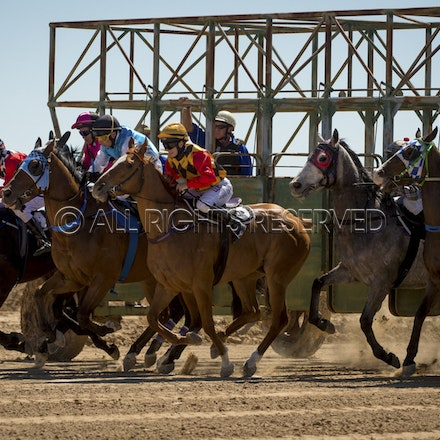 Race 1, Starting Gate_27-08-16, Betoota_0016