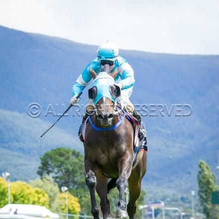 Race 2, Galeocerdo, Sigrid Carr_03-02-17, Hobart, Sharon Lee Chapman_0033