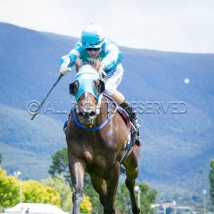 Race 2, Galeocerdo, Sigrid Carr_03-02-17, Hobart, Sharon Lee Chapman_0034
