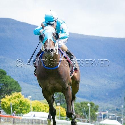 Race 2, Galeocerdo, Sigrid Carr_03-02-17, Hobart, Sharon Lee Chapman_0035