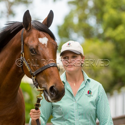 Lot 329, Written Tycoon x Society Barber, Colt, Newhaven Park_11-01-18, MM, SLC_0072