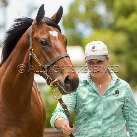 Lot 329, Written Tycoon x Society Barber, Colt, Newhaven Park_11-01-18, MM, SLC_0106