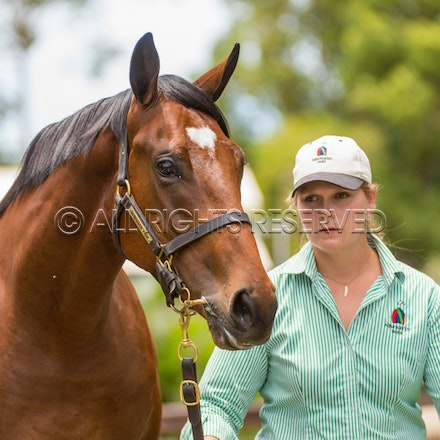 Magic Millions - Newhaven Park