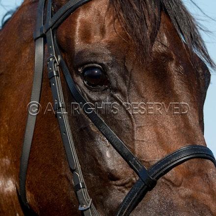 Race 7, Levendi_07-04-18, Royal Randwick, Sharon Lee Chapman_0085