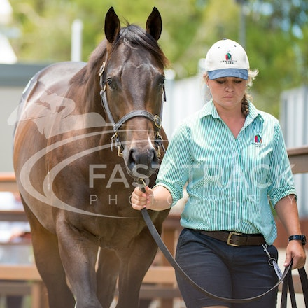 Magic Millions - Day Two - 7 January 2016