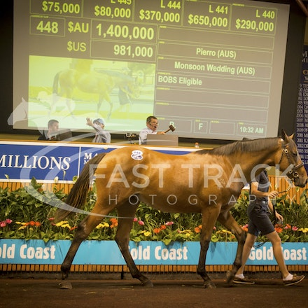Lot 448, Pierro x Monsoon Wedding filly, Coolmore_08-01-16, Day Three, Magic Millions_0002