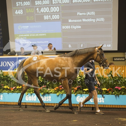 Lot 448, Pierro x Monsoon Wedding, Filly, Coolmore_08-01-16, Day Three, MM_0115