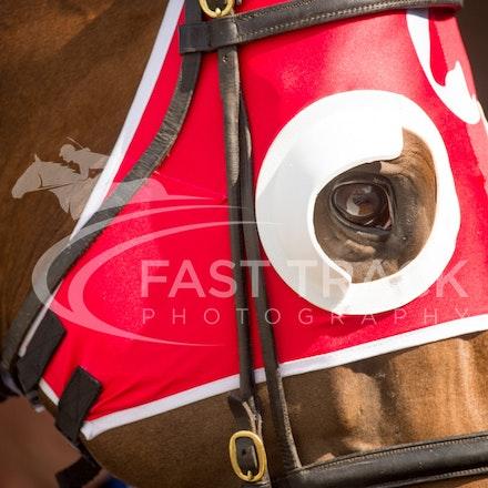 Race 1, Hutcho_09-04-16, Royal Randwick_0010